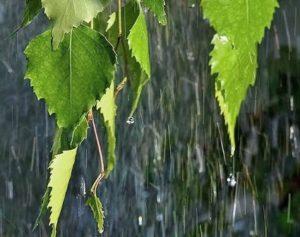 """Изображение записи """"Мысли, навеянные первым летним дождем"""""""